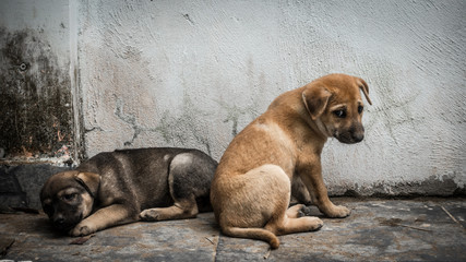 Vietnam Sad Dog Fotobehang