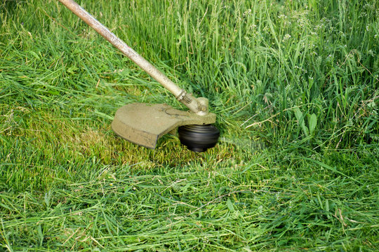 Mowing green grass using a fishing line trimmer. Application trimmers.