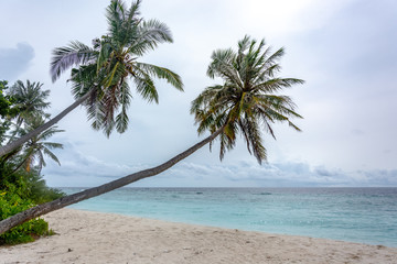 Stunning tropical beach with white sand in the Maldives. a great place to dive into meditation and Nirvana