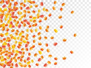 Maple leaves vector illustration, autumn foliage on transparent background.