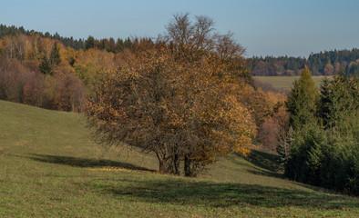 Autumn tree on meadow near Zitkova village