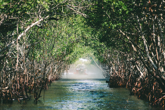 Everglades, Florida and airboat