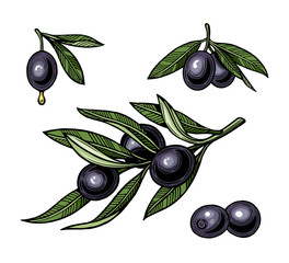 Olives on branch with leaves. Illustration for logotype, poster, web.