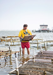 Man holding metal grate while standing in oyster farm