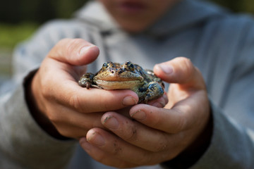 Cropped image of boy holding frog