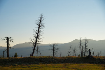 Stark landscape of dead trees in morning light with distant mountains