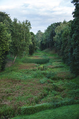 beautiful view of green trees and bushes in the park, forest walk