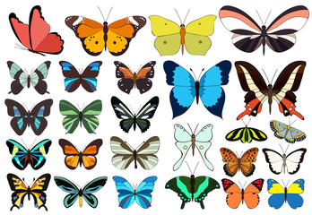 vector, isolated, set of beautiful multicolored butterflies