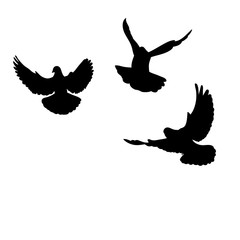isolated, black silhouette of flying pigeons, flock of birds flying