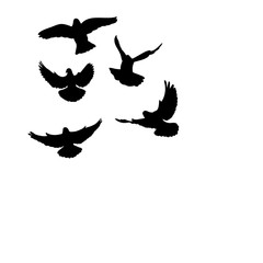 vector, isolated, flock of birds flying, silhouette