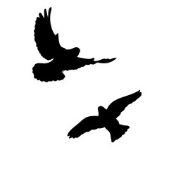 vector, isolated, black silhouette of flying pigeons, flock of birds flying