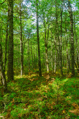 Trees and forest, in Kejimkujik National Park