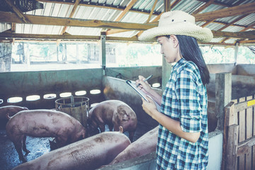 Veterinarian working on check and manage at agriculture farm ;woman inspecting pork plant and inspecting pig