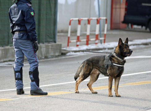 police dog of the Italian police during a soccer game