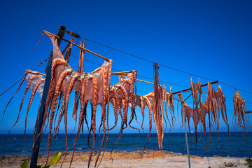 Dry Octopus dried at Mediterranean sea
