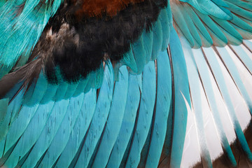 Image of white-throated kingfisher wings on a white background. Bird. Animal.