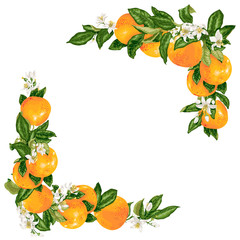Vector grapefruit branches in a frame decoration