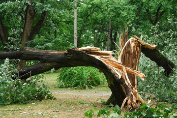 Tempete Broken tree trunk in a park