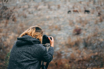 Photographer taking pictures of free wild horses on the rocks, autumn season