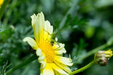 黄色い花とバッタ