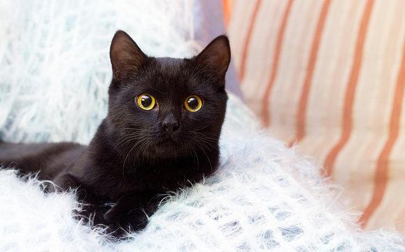 black cat at home
