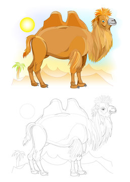 Colorful and black and white page for coloring book. Fantasy illustration of cute camel in the desert. Worksheet for children and adults. Vector cartoon image.