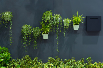 Natural green tree plant in pot on the gray wall interior decoration contemporary