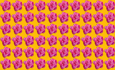 Pink roses with orange background with copy space, idea or concept for a romantic message, proposal, Valentine day, or seamless pattern for wallpaper or backdrop inspiration