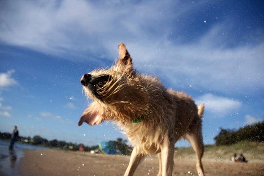 Retrato de perro en la playa