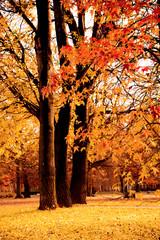 Alberi con foglie autunnali