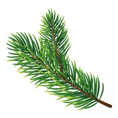 Pine tree branch icon. Realistic illustration of pine tree branch vector icon for web design isolated on white background