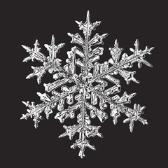 Vector illustration based on macro photo of real snowflake: beautiful stellar dendrite snow crystal with fine hexagonal symmetry, complex ornate shape and six long, elegant arms with side branches.