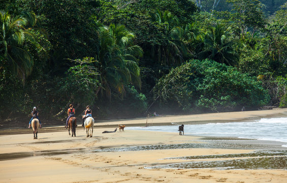 Horse riding on Beach in Costa Rica at the Caribbean in Punta Uva Beach