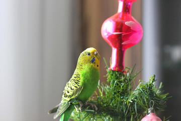 Parrot on a New Year tree
