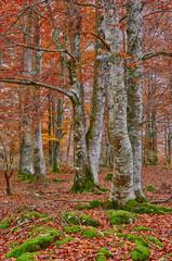 Bosque de colores en otoño