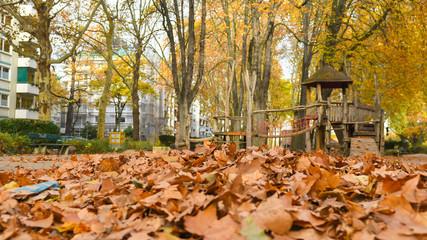 Herbstlaub im Stadtpark