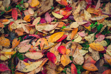 Colorful vibrant autumn leaves background