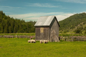 Stunning rural farm in a romanian mountains.  Romanian hillside and village in summer time