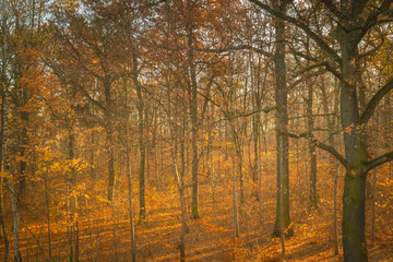 Landschaft im Herbst, Herbstwald