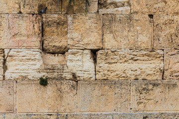 the Western wall texture with dove sitting on the stone