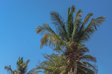Detailed view of palm trees on the island of Mussulo, Luanda, Angola...