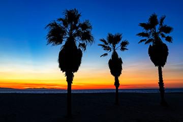 Beach sunset palm trees