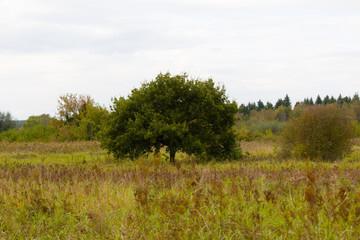 Białostockie zielone i uschłe łąki i drzewa wiejskie krajobrazy Polska Podlasie