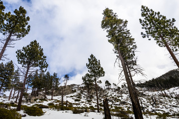 Landscape in Van Sickle Bi-State Park on a winter day with changing weather; south Lake Tahoe, California