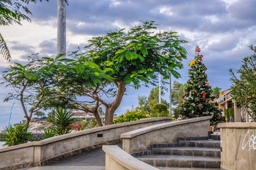 Tree and christmas tree with steps in Tenerife, Spain