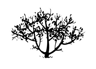 Hand drawn tree, bush silhouette. Ink vector illustration isolated on white background.