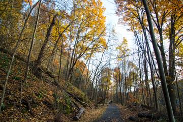 Autumn's foot path