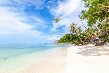 Fototapete - Beautiful tropical delightful extraordinary bright paradise landscape, white sand and palm trees,