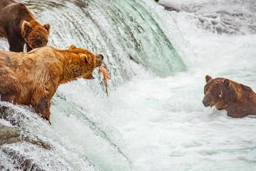Grizzly bears fishing for salmon at Brooks Falls, Katmai NP, Alaska Wall mural