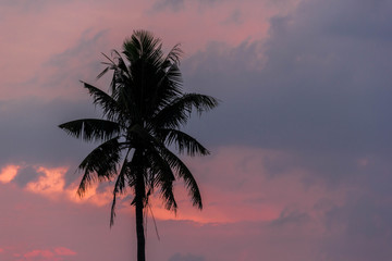 Silhouette palm tree with sunset background